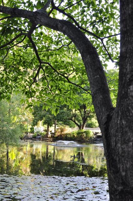 brisbane bontanical gardens
