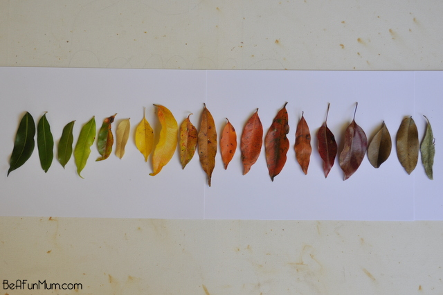 Rainbow Leaves