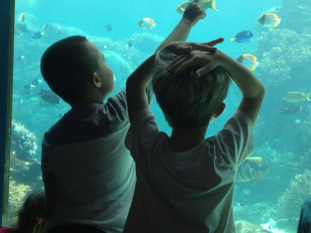 school holiday fun -- fun for boys -- visit an aquarium