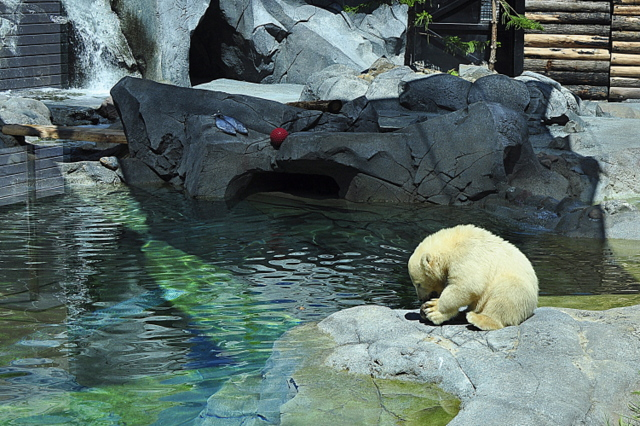 Sea World Polar Bear Shores