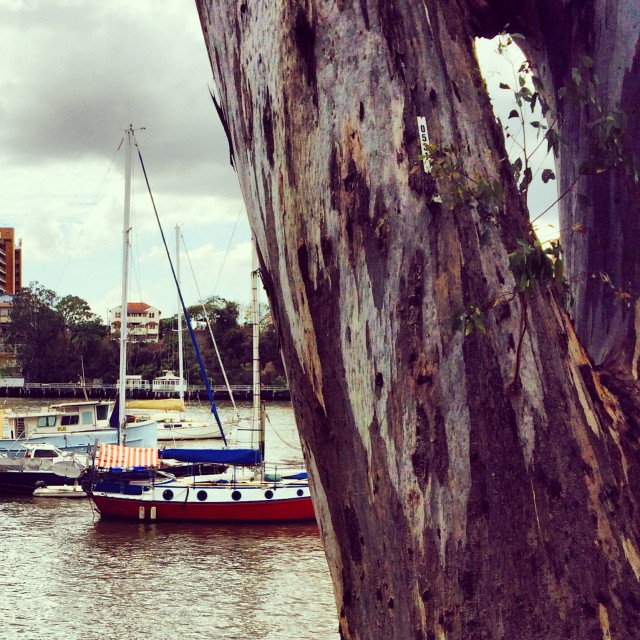Botanical Gardens - Brisbane