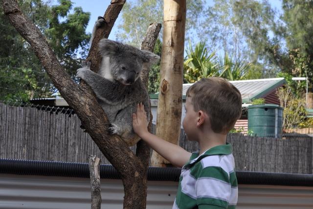 Snakes Downunder - Koala