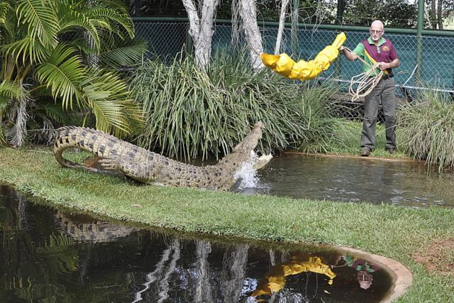 Snakes Downunder - Childers