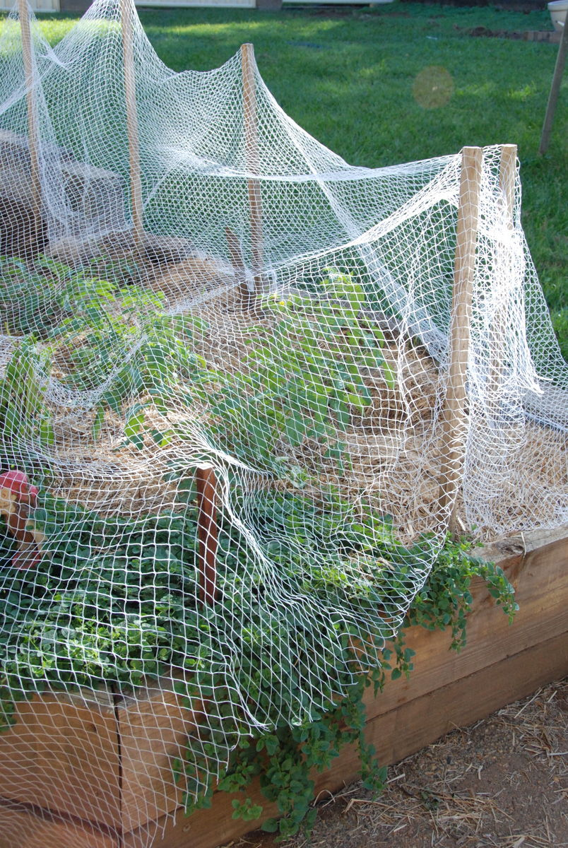Planting your Vegetables Seedlings into the garden