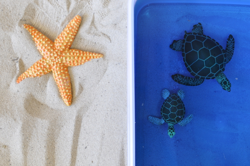 Imaginative Play Scene - sand and sea