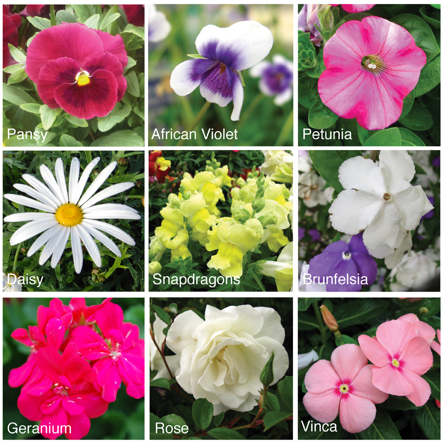 How to press flowers  - Nine best flowers for book flower press #beafunmum #aboutthegarden