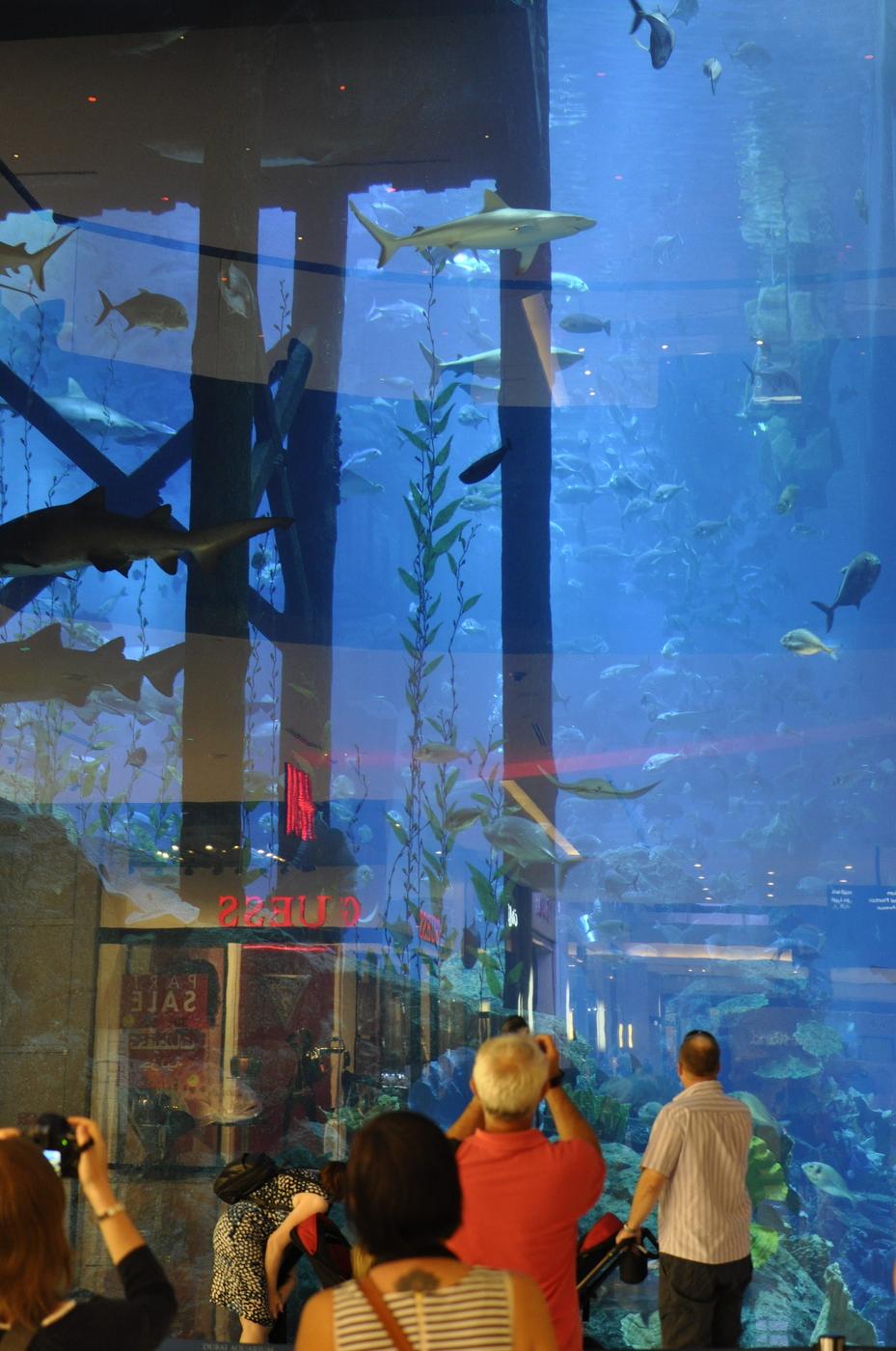 Dubai Aquarium & Underwater Zoo - Dubai