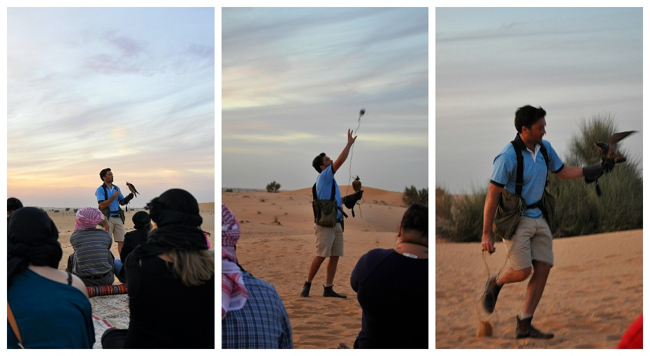 Falconry - Dubai Safari