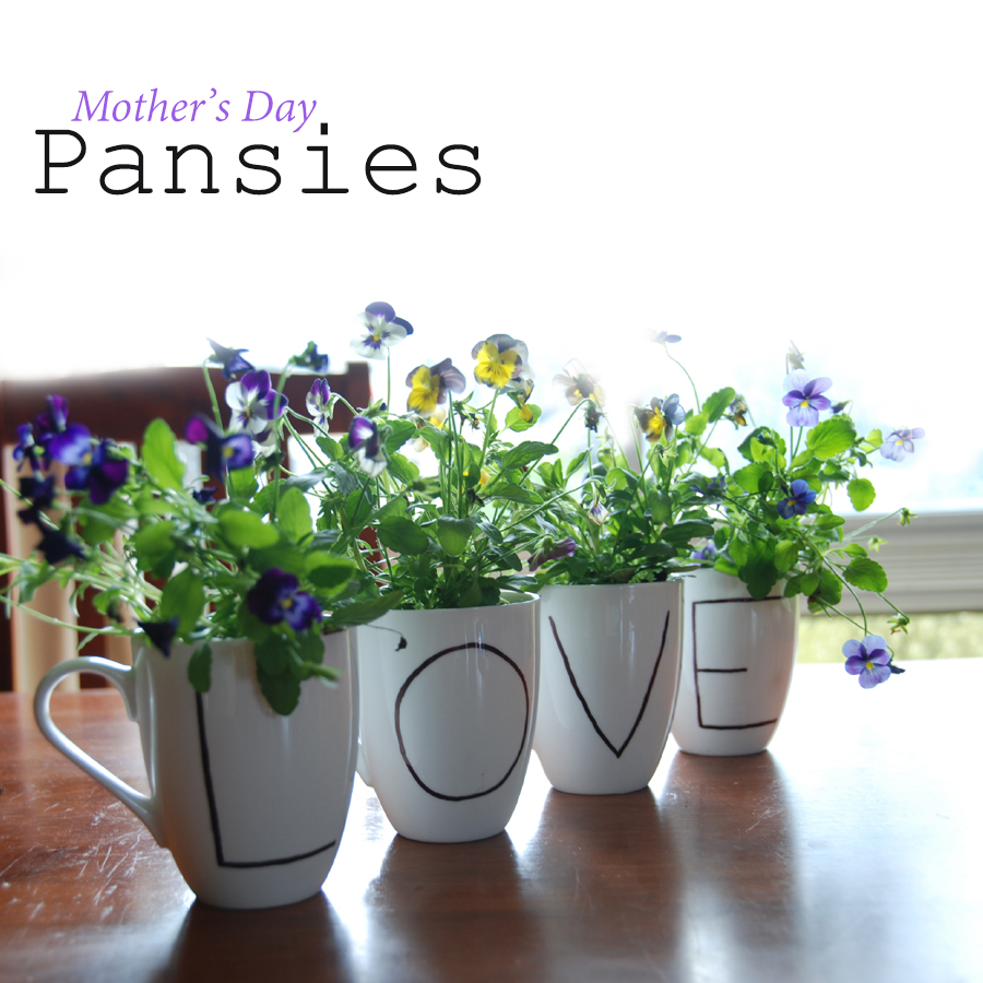 Mothers day pansies autumn
