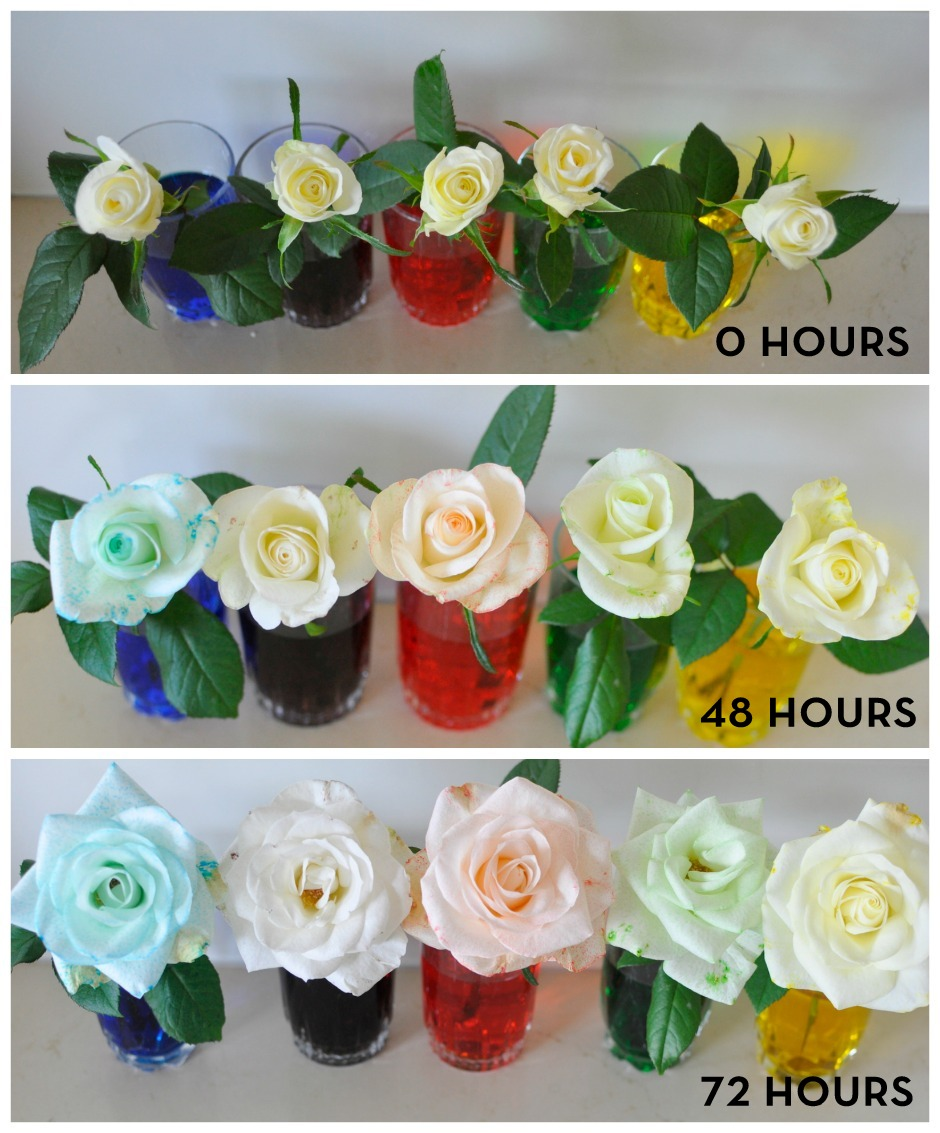 Rainbow Flowers - colour change times