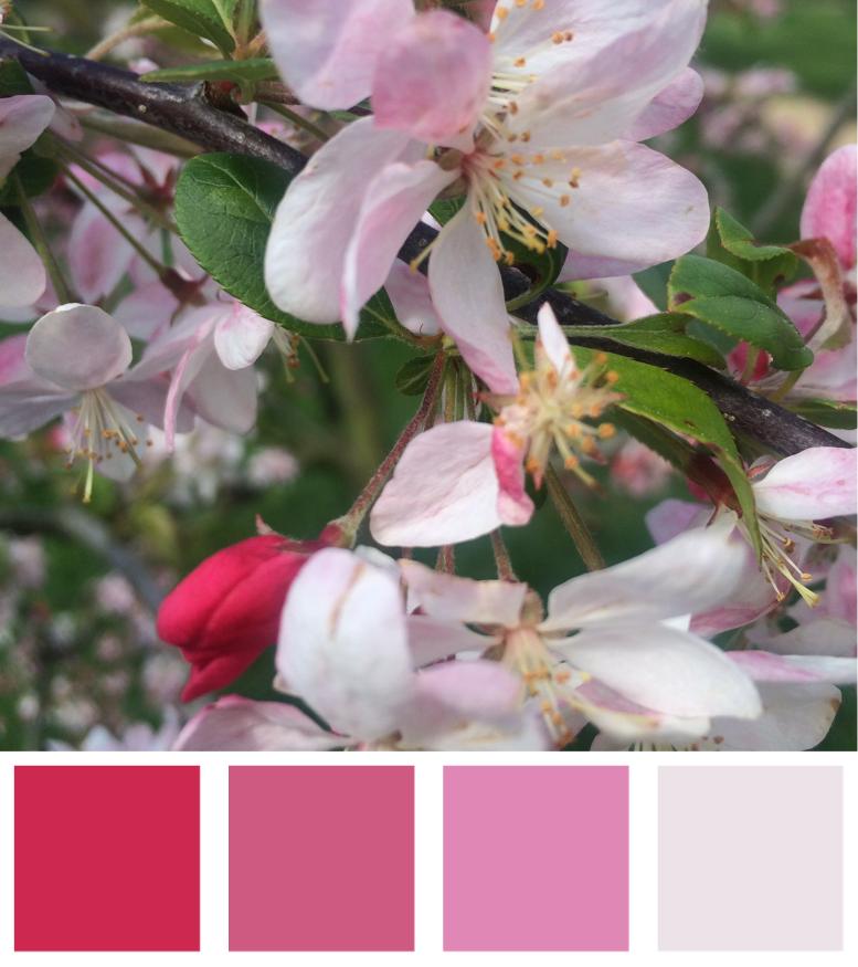 Spring Blossom Blush Colour Palette