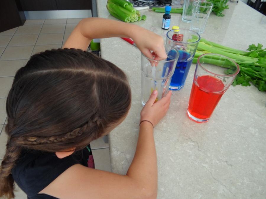 Celery Watercolour Experiment