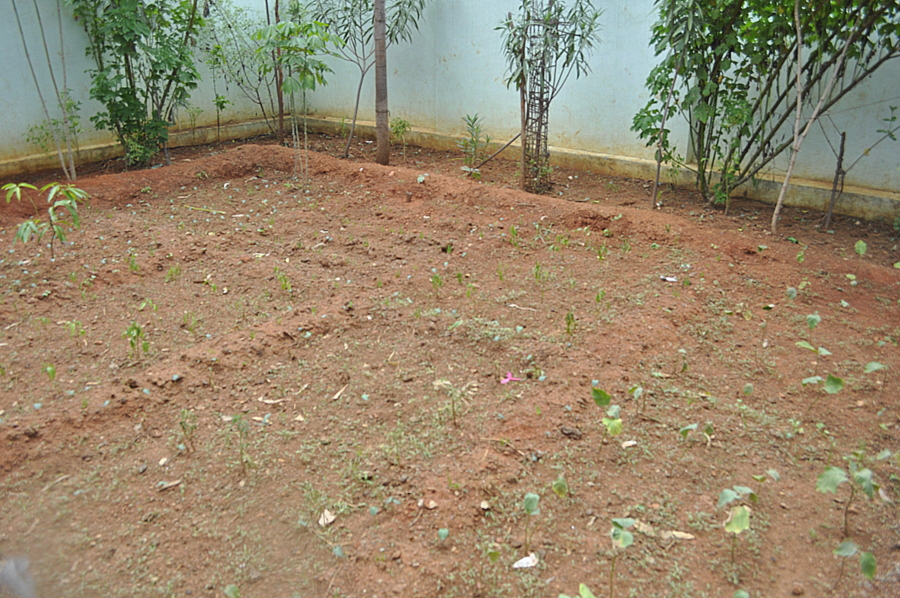 World Vision Projects - School Garden